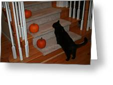 Curious Black Cat Greeting Card