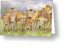 Curious Calves Greeting Card