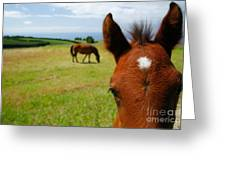 Curious Colt Greeting Card