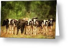 Curious Cows Greeting Card