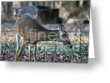 Curious Deer Greeting Card