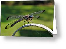 Curious Dragonfly Greeting Card