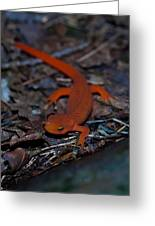 Curious Eft Greeting Card