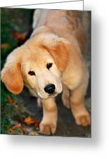 Curious Golden Retriever Pup Greeting Card