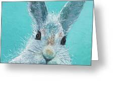 Curious Grey Rabbit Greeting Card