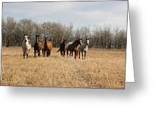 Curious Horses Greeting Card