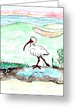 Curious Ibis Stands By Greeting Card
