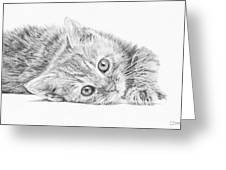 Curious Kitten Greeting Card