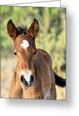 Curious Little Colt  Greeting Card