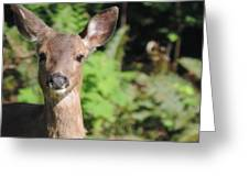 Curious Little Deer Greeting Card