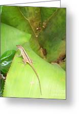 Curious Lizard I Greeting Card