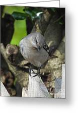 Curious Mockingbird Greeting Card