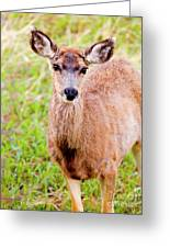 Curious Mule Deer Frolicking On A Colorado Spring Afternoon Greeting Card