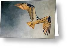 Curious Osprey Greeting Card