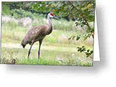 Curious Sandhill Crane Greeting Card