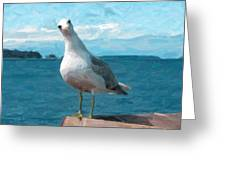 Curious Seagull Greeting Card