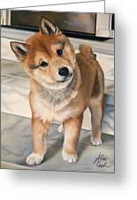 Curious Shiba Inu Greeting Card