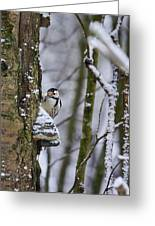Curious White-backed Woodpecker Greeting Card