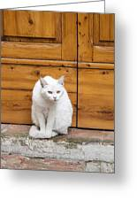 Curious White Cat  Greeting Card