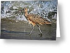 Curlew And Tides Greeting Card