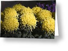 Curly Mums Greeting Card