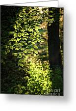 Curtain Of Leaves Greeting Card