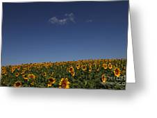 Curvature Greeting Card