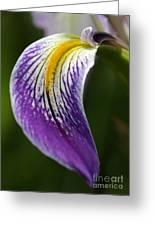 Curve Of An Iris Greeting Card