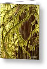Curves In The Rainforest Greeting Card