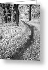 Curving Path Through Woods Greeting Card