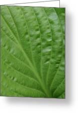 Curvy Leaf Lines Greeting Card