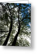 Curvy Trees Greeting Card