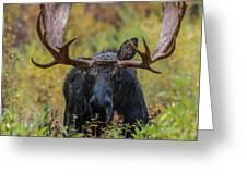 Custer In Autumn Greeting Card
