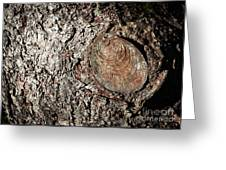 Cut Branch On Tree Trunk Greeting Card