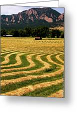 Cut Hay In Field Greeting Card