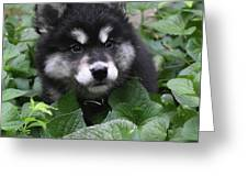 Cute Alusky Puppy In A Bunch Of Plant Foliage Greeting Card