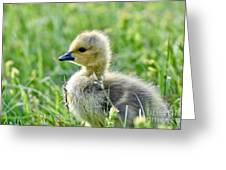 Cute Baby Goose In A Grass Field Greeting Card