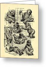 Baby Monkeys Playing Black And White Antique Illustration Greeting Card