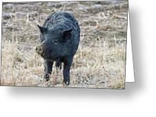 Cute Black Pig Greeting Card