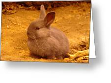 Cute Bunny Greeting Card