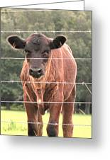 Cute Calf Greeting Card