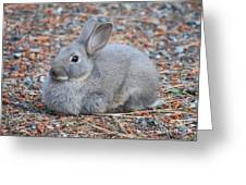 Cute Campground Rabbit Greeting Card