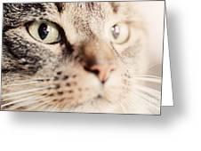 Cute Cat Close-up Portrait Greeting Card