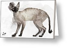 Cute Cornish Rex Youngster Greeting Card