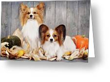 cute couple dogs breed papillon by Iuliia Malivanchuk  Greeting Card