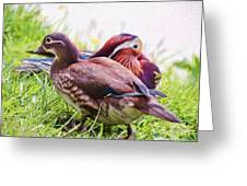 Cute Couple - Mandarin Ducks Greeting Card
