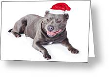 Cute Dog In Santa Hat Greeting Card