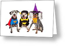 Cute Dogs Wearing Halloween Costumes Greeting Card