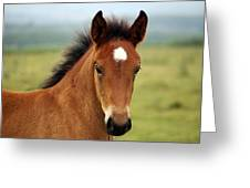 Cute Foal Greeting Card