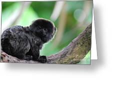 Cute Goeldi's Marmoset Sitting In A Tree Greeting Card